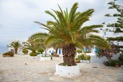 Drzewko palmowe na Mykonos miasteczku Zdjęcia Royalty Free