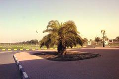 Drzewko palmowe na nieba tła naturze w Dubaj Zdjęcia Royalty Free