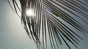 Drzewko palmowe na niebieskiego nieba tle poruszającym na wiatrze przez słońca z obiektywu racy skutkami swobodny ruch 1920x1080 zbiory