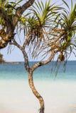 Drzewko palmowe na Phu Quoc wyspie Zdjęcie Stock