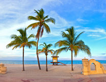 drzewko palmowe na pięknym pogodnym lata popołudniu w Hollywood plaży Zdjęcia Royalty Free