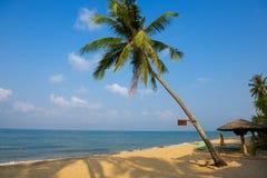 Drzewko palmowe na piaskowatej plaży z znakiem zdjęcia royalty free