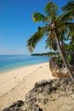 Drzewko palmowe na plaży Zdjęcia Royalty Free