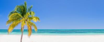 Drzewko palmowe na plaży w Cayo Levisa Kuba, panoramiczny tło z kopii przestrzenią, podróży pojęcie Obrazy Stock