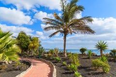 Drzewko palmowe na Playa Blanca nabrzeżnym deptaku Obrazy Stock