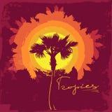 Drzewko palmowe na punkcie Ciepła paleta Obraz Royalty Free