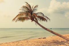 Drzewko palmowe na pustej plaży - jeden drzewko palmowe na oceach z oceanów półdupkami Obrazy Royalty Free