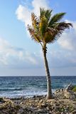 Drzewko palmowe na seashore Obrazy Royalty Free