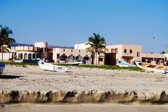 Drzewko palmowe na seashore Zdjęcia Royalty Free