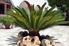 Drzewko palmowe na ziemi Zdjęcia Royalty Free