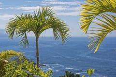 Drzewko palmowe nad Pacyficznym oceanem Zdjęcia Royalty Free
