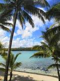 Drzewko palmowe natury wakacyjna tropikalna plaża zdjęcie royalty free