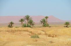 Drzewko palmowe oaza w Afryka Obraz Royalty Free