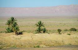 Drzewko palmowe oaza w Afryka Zdjęcie Stock