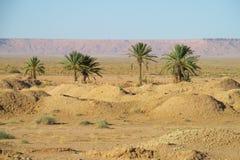 Drzewko palmowe oaza w daleko Obrazy Stock
