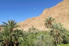Drzewko palmowe oaza w górach Obrazy Royalty Free