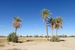 Drzewko palmowe oaza w piasek pustyni Zdjęcia Stock