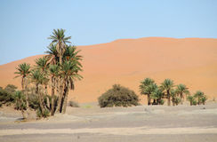 Drzewko palmowe oaza w piasek pustyni Obraz Royalty Free