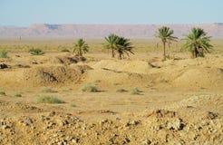 Drzewko palmowe oaza w pustyni Obraz Royalty Free