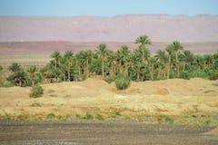 Drzewko palmowe oaza w Sahara Fotografia Stock