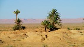 Drzewko palmowe oaza w Sahara Obraz Royalty Free