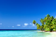 Drzewko Palmowe plaża fotografia royalty free