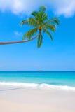 drzewko palmowe plażowe błękitny jasne krystaliczne wody Obrazy Royalty Free