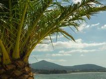 Drzewko Palmowe plaża i góry Obraz Stock