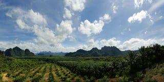 Drzewko Palmowe plantacja Obrazy Royalty Free