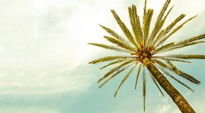 Drzewko Palmowe przeciw lato słonecznemu dniu z jasnego nieba panoramicznym tłem zdjęcie stock