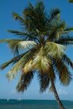 Drzewko palmowe przeciw morzu i niebieskiemu niebu Obrazy Stock