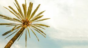Drzewko Palmowe przeciw pogodnego jasnego nieba panoramicznemu tłu Fotografia żółty kolor tonował dla retro rocznika lata spojrze zdjęcia stock