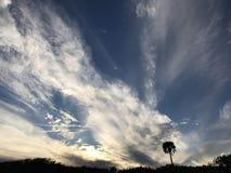 Drzewko palmowe PRZED PATRICK ` S bazą lotniczą W MELBOURNE, FLORYDA obrazy royalty free