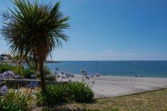 drzewko palmowe przy Atlantyk w Benodet, Francja zdjęcie stock