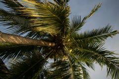 Drzewko Palmowe przy Koh Phangan obrazy royalty free