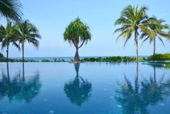 Drzewko palmowe przy pływackim basenem Obrazy Royalty Free