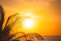 Drzewko palmowe przy pięknym zmierzchem obraz stock