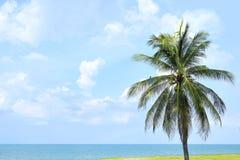 Drzewko palmowe przy plażą Obrazy Stock