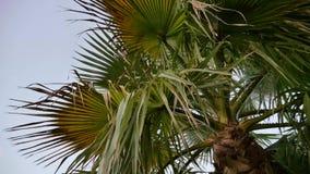 Drzewko palmowe przy zmierzchem w lecie z odrobina wiatrem zbiory