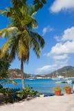 Drzewko palmowe ramy ukrywają pełno przyjemności łodzie w Karaiby Fotografia Stock