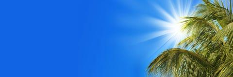 Drzewko palmowe, słońce i niebo, Fotografia Royalty Free