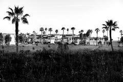 Drzewko Palmowe sezon przy Avila pla?? fotografia royalty free