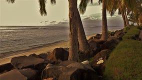 drzewko palmowe skały zdjęcia stock
