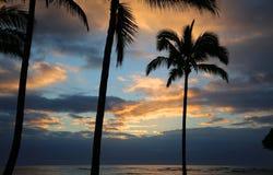 Drzewko palmowe sylwetka na wschodu słońca niebie Fotografia Royalty Free