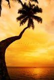 Drzewko palmowe sylwetka na zmierzch tropikalnej plaży Obrazy Royalty Free