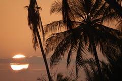 Drzewko palmowe sylwetka przy zmierzchem z dużym słońcem za chmurami Fotografia Royalty Free