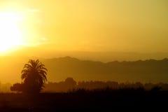 Drzewko palmowe sylwetka przy zmierzchu światłem Obrazy Royalty Free