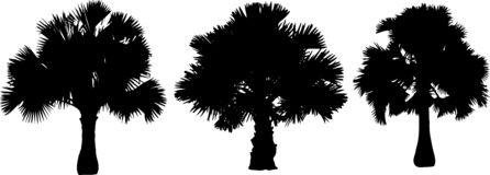 Drzewko palmowe sylwetki wektoru paczka royalty ilustracja