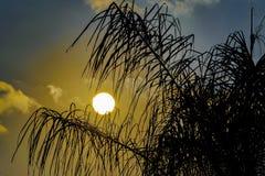 Drzewko Palmowe sylwetki zmierzchu scena Fotografia Royalty Free