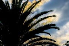 Drzewko Palmowe sylwetki zmierzchu scena Zdjęcie Royalty Free
